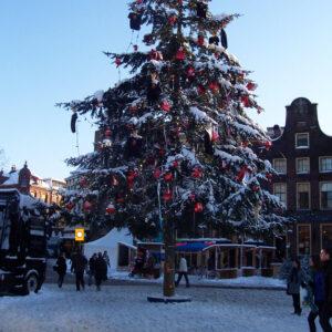 StedelijkGroen-kerstbomen