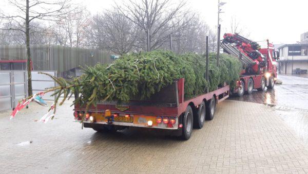 Grote Kerstboom 8 9 10 11 12 13 14 15 16 17 18 meter plaatsen stad of dorp door Stedelijk Groen bv