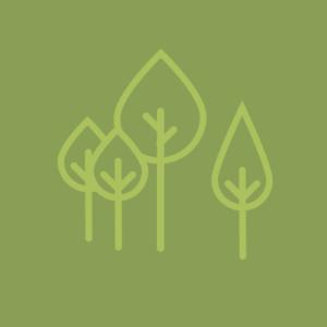 Bomen en beplanting