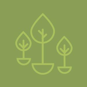 Aanplant en groeiplaats