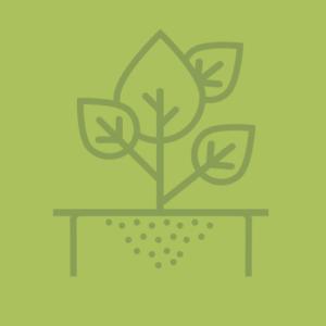 Groeiplaats constructies en boombescherming