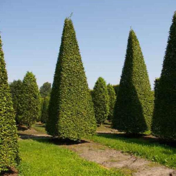 StedelijkGroen bomen en heesters