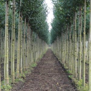 StedelijkGroen bomen heesters boomkwekerij