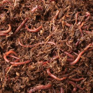 Stedelijk Groen Regenwormen