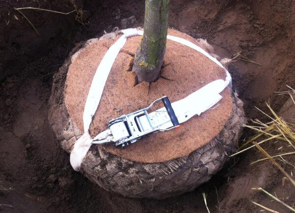 bio kluitverankering boomaanplant boomverzorging